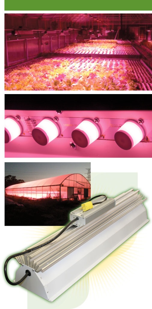 TotalGrow SSVL Light Technology Driving Broad Grow Spectrum Lighting, with Hydroponic Lettuce Production Shown