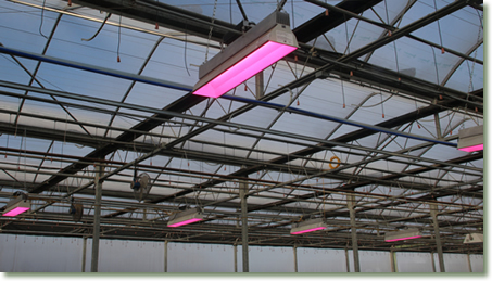 Meadowridge using TotalGrow Broad Grow Spectrum LED Light Fixtures for Efficient Propagation