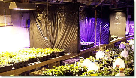 Ohio State University ATI Testing of TotalGrow Broad Grow Spectrum LED Lighting vs. HPS Over Bedding Plants
