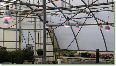 Vandermolen Greenhouse Using TotalGrow Broad Grow Spectrum Light LED Bulbs for Improved Bedding Plant Propagation