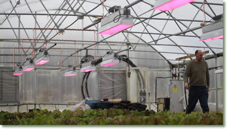 Mud Lake Farms Growing Hydroponic Lettuce with TotalGrow Broad Grow Spectrum LED Light Fixtures