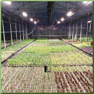 Supplemental Greenhouse Lighting With Totalgrow Tg15a Broad Grow Spectrum Light Led Fixtures
