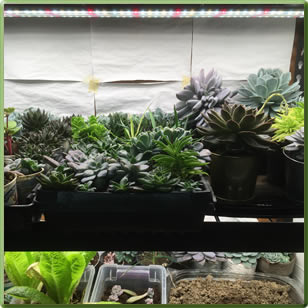 Home Growing Of Microgreens With Totalgrow Tg1a 1003 Broad Grow Spectrum Light Led Bulbs