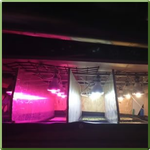 TotalGrow LED Light Spectra Research