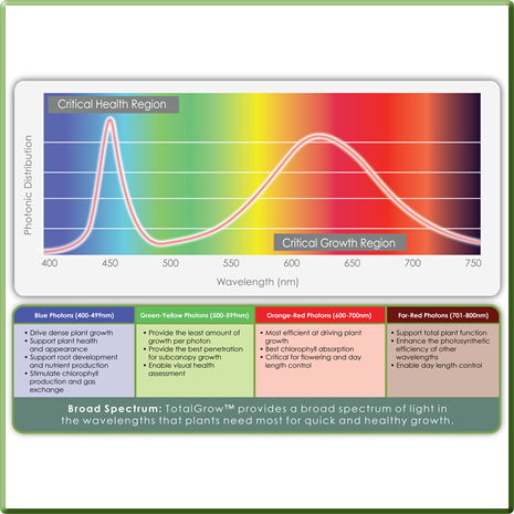 Learn About Plant Responses to Light Spectral Cues
