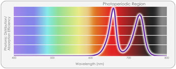 TotalGrow Pure Flowering Light Spectrum Photonic Distribution