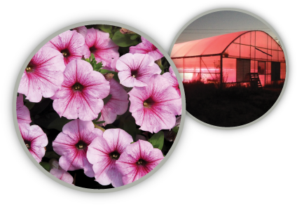TotalGrow Night & Day Management Lights Provide Photoperiodic Flowering Control of Crops Like Petunias