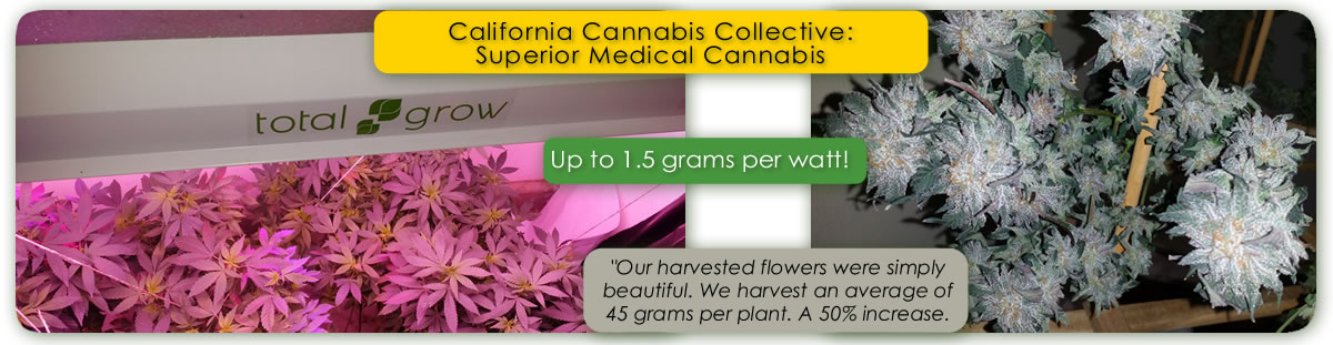 California Cannabis Collective Testing Results of TotalGrow Broad Grow Spectrum Lighting vs. Conventional Medical Marijuana Grow Lighting