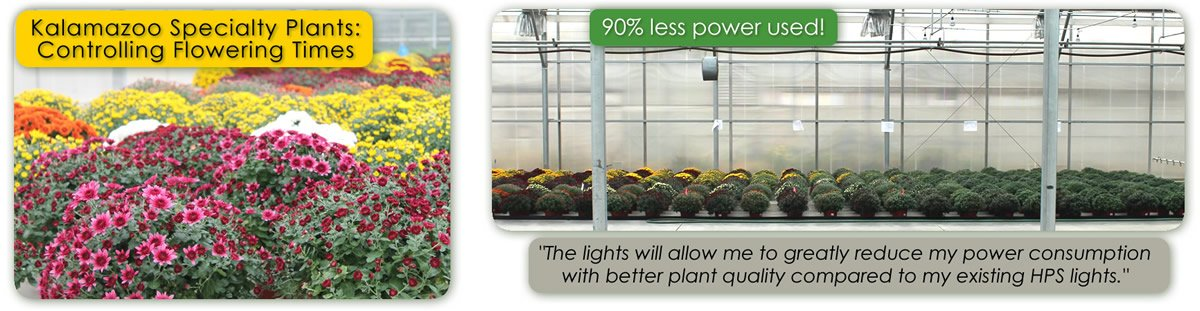 Kalamazoo Specialty Plants Testing of TotalGrow Night & Day Management Photoperiodic LED Lighting Over Mums