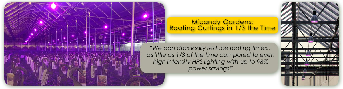 Micandy Gardens Study of TotalGrow Night & Day Management LED Lights for Faster Rooting of Cuttings