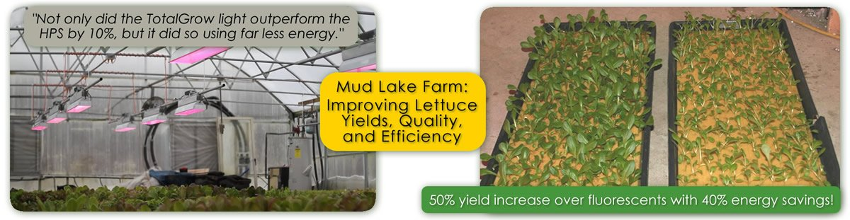 Mud lake Farm Case Study of TotalGrow Broad Grow Spectrum LED Lighting for Hydroponic Lettuce Production